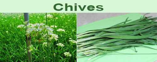 Chives are the vegetable that maintains joint health and eye health
